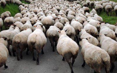 Les médias sociaux et l'instinct de troupeau